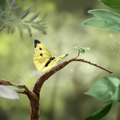Photoshop-Drawing, Butterfly, Forest