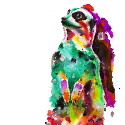 Handdrawn Aquarell on vat-paper • Suricate